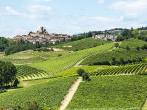 Piedmont wine tour